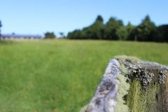 Open-Field